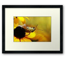 In a Yellow World Framed Print
