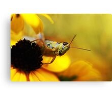 In a Yellow World Canvas Print