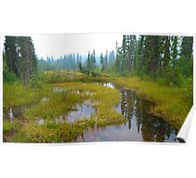Swamp, Mount Robson, BC Poster