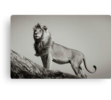 THE LION KING by Dennys Ilic Canvas Print