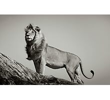 THE LION KING by Dennys Ilic Photographic Print