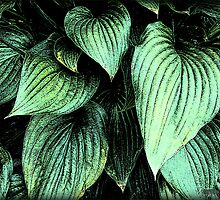Happy Hosta by Debbie Robbins
