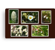 Collage of White Rocky Mountain Wildflowers Canvas Print