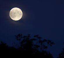August Full Moon 2010 by Deborah  Benoit