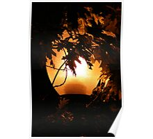 Torching the Tree Poster