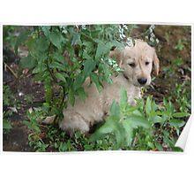 Peek A Boo! Betty Boop - 10 Poster