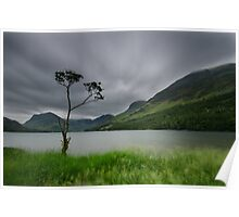 The Buttermere Tree Poster