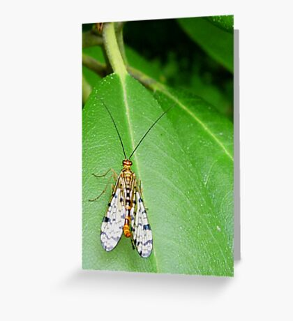 It's golden... A bug that is!  Greeting Card