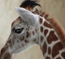 Newborn Giraffe Sticker