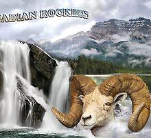 Postcard from Canadian Rockies by Teresa Zieba