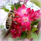 Bee on blooming jostaberry  by ©The Creative  Minds