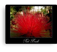Red brush flower Canvas Print