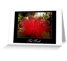 Red brush flower Greeting Card