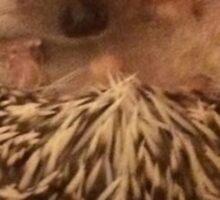 Bronx the Hedgehog Sticker
