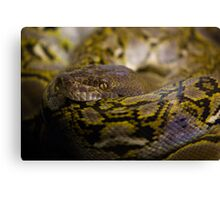 Coiled Canvas Print