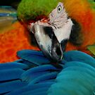 Macaw at Jungle Gardens V by Sheryl Unwin