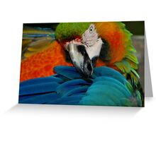 Macaw at Jungle Gardens V Greeting Card