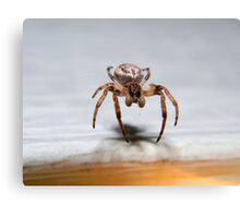 Orb-weaver spider. Canvas Print
