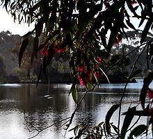 Aussie Reds by Lozzar Landscape