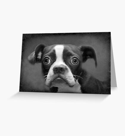 Boston Terrier Greeting Card