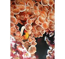 Clownfish Hiding Photographic Print