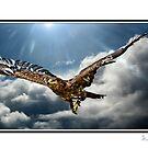 Majestic Flight by ©FoxfireGallery / FloorOne Photography