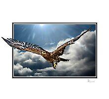Majestic Flight Photographic Print