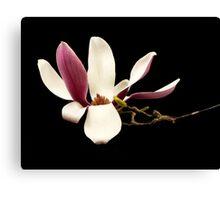 Magnolia in the Studio Canvas Print
