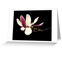 Magnolia in the Studio Greeting Card