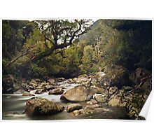 Forest Stream - Fiordland National Park Poster