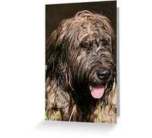Briard Greeting Card
