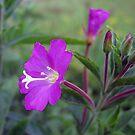 Wild flower by hjaynefoster
