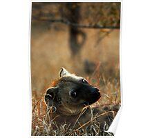 Kruger National Park, South Africa. 2009  V Poster
