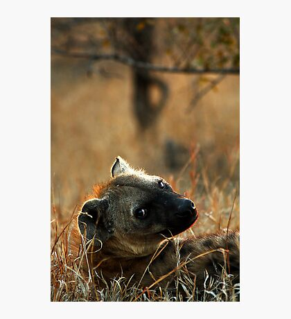 Kruger National Park, South Africa. 2009  V Photographic Print