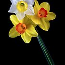 Daffodils by Mary Broome