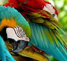 Macaws at Jungle Gardens VII by Sheryl Unwin