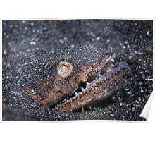 Stargazer Snake Eel - Lembeh Strait Poster