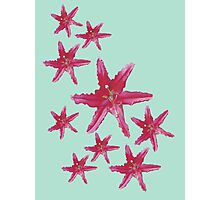 Pink Lilies (Ex) Photographic Print