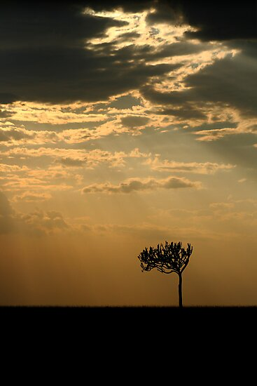 Sunset Over Masai Mara, Kenya by Damienne Bingham