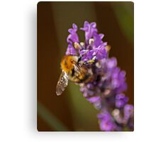 Pollen Junky Canvas Print
