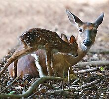 Mother and New Born by imagetj