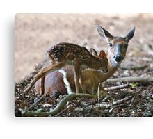 Mother and New Born Canvas Print