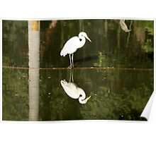 White Bird with reflection on water. Poster