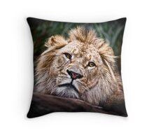 Depressed Young Lion Throw Pillow