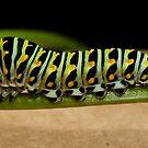 Backyard Caterpillar by martinilogic