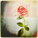 Vintage Rose by mariakallin