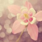 Columbine and Bokeh by mariakallin
