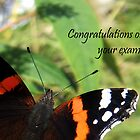 Congrats on passing exams card-Red Admiral Butterfly by sarnia2