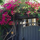 Rose Covered Door by Karen Checca