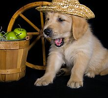 Country Pup by Maria Dryfhout
